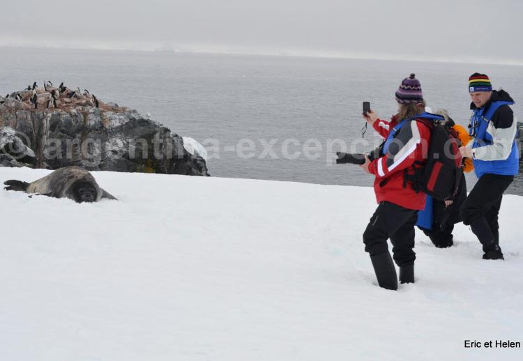 Phoque de Wedell - Antarctique