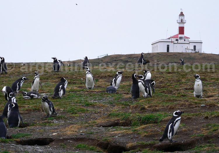 Isla Magdalena, Patagonie