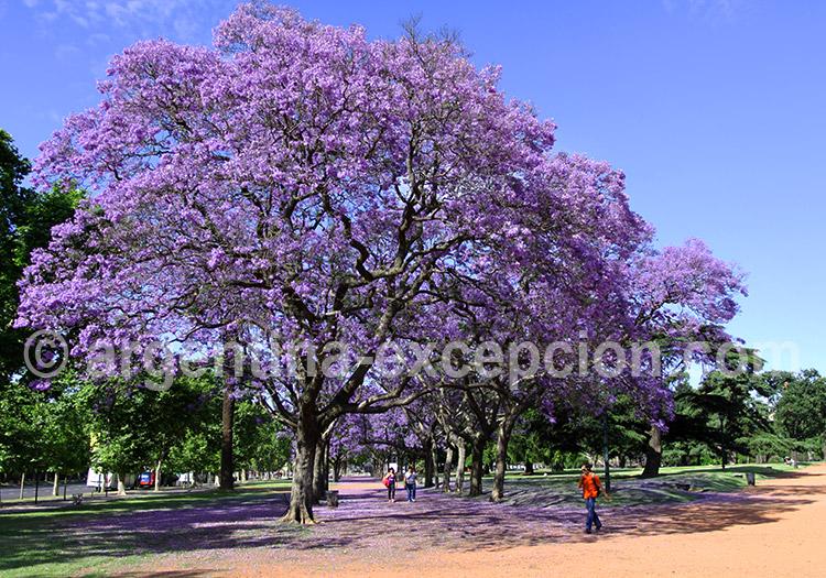 Jardins de Palermo, Buenos Aires