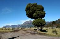 Lago Paimun, Patagonie