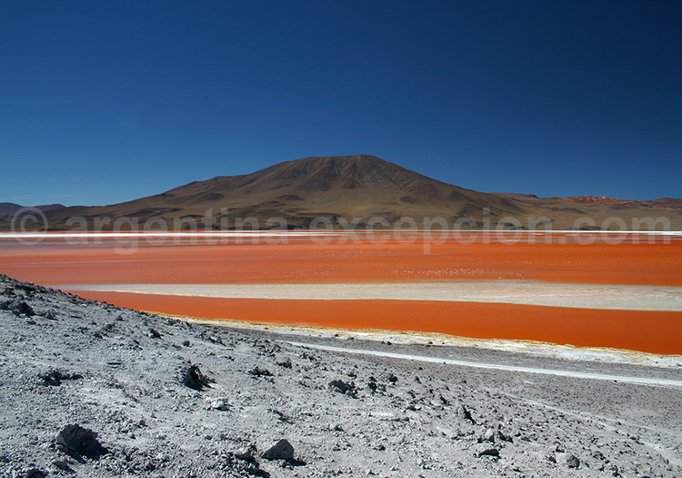 Laguna Colorada, Bolivie - Crédit Jacques Vaysse