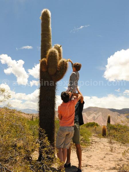 A la cueillette aux cactus