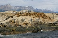Lions de mer, canal de Beagle, Ushuaia
