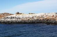 Lions de mer et cormorans, Bahia Bustamante