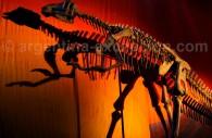 musee paleontologique san juan