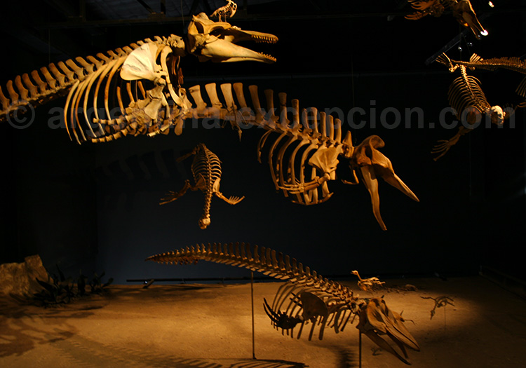 Musée Paléontologique Egidio Feruglio