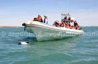 Observation dauphins, Rawson, Patagonie