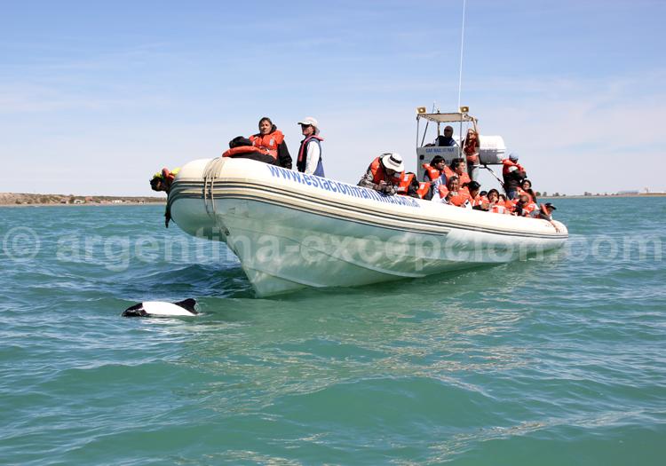 Observation dauphins Commerson, Rawson, Patagonie