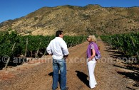 Apprendre sur les vins en Argentine