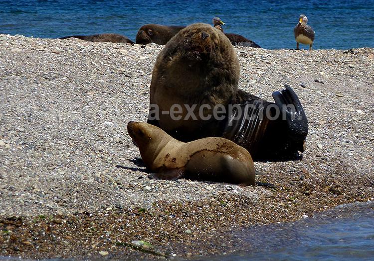 Parc Monte Leon, Patagonie