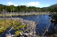 Parque Tierra del Fuego, Ushuaia - CC Jacques Vaysse