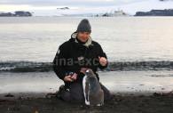 Fauna Antártida