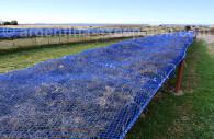 Traitement des algues de Bahia Bustamante