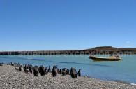 Puerto Deseado, Patagonie