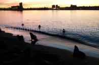 Réserve de lions de mer, escollera Sur, port de Mar del Plata