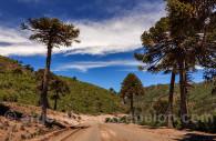 Roadtrip en Patagonia