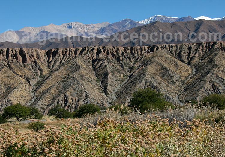 Route de Cachi à Payogasta