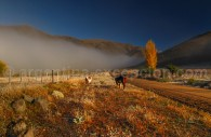 Sur la route 40 en Patagonie
