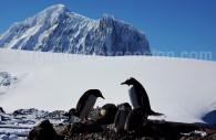 tourisme antarctique