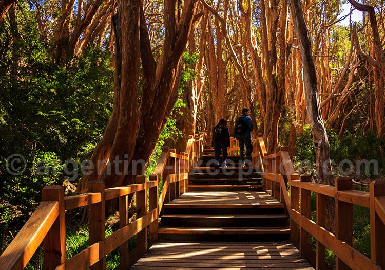 Parc Los Arrayanes
