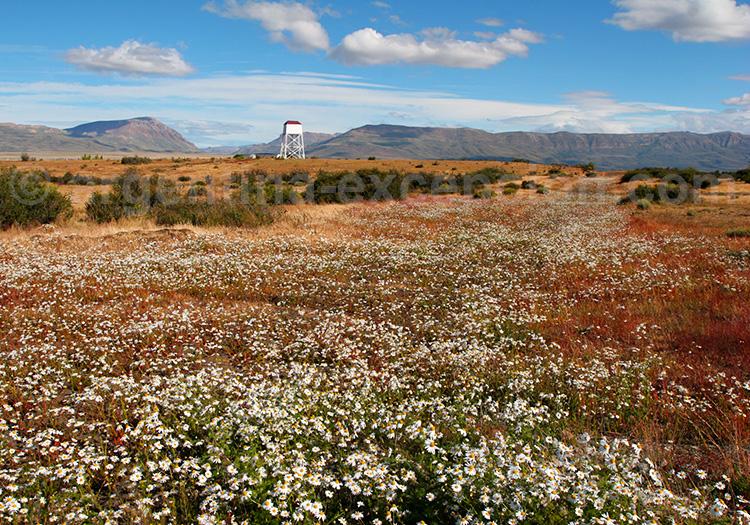 Province de Santa Cruz, Patagonie