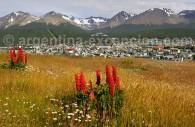 Le bout du monde à Ushuaia