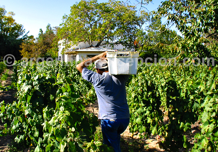 Route des vins, La Rioja, Argentine