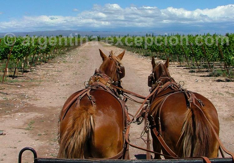 Balade à cheval avec la bodega Tapiz, Route 40