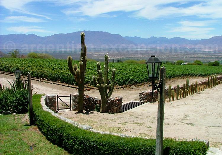 San Pedro de Yacochuya, Cafayate