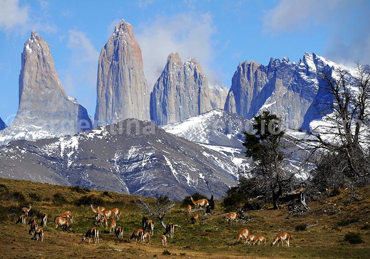 Point de vue sur les tours du Paine, Patagonie