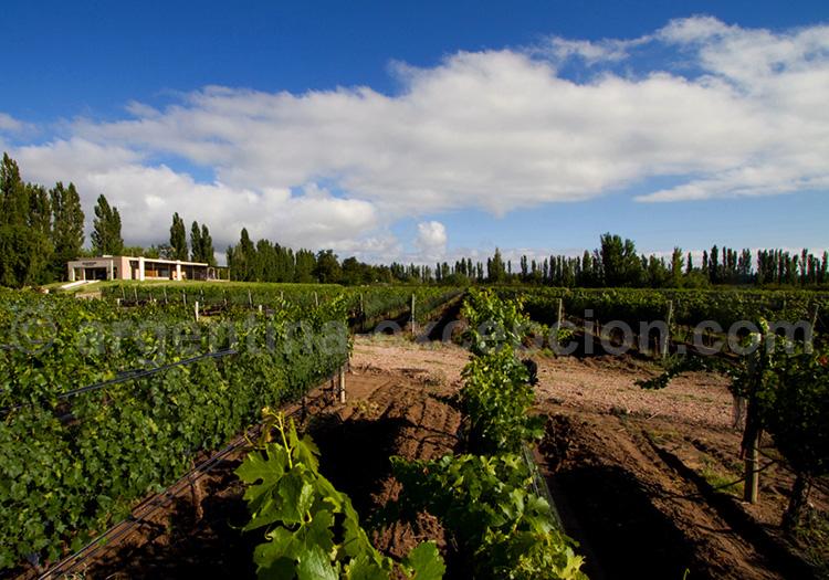 Bodega Algodon Wine Estates