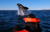 Baleine Franche Australe, péninsule Valdés