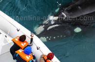 Ballenas en Valdès