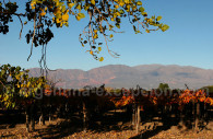 Route des vins de Cafayate