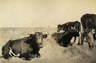 rencontres patagonie