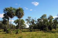 Parc national du Chaco - Crédits wikimédia