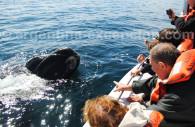 observation des baleines argentine