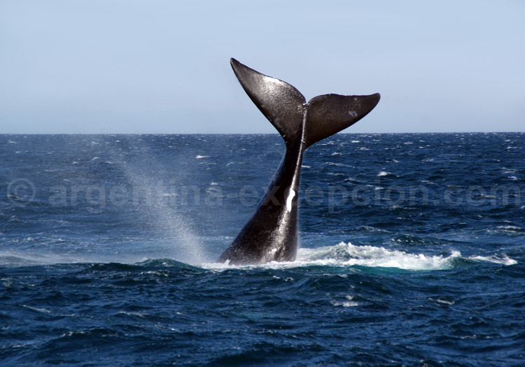 Monument national Baleine Franche Australe