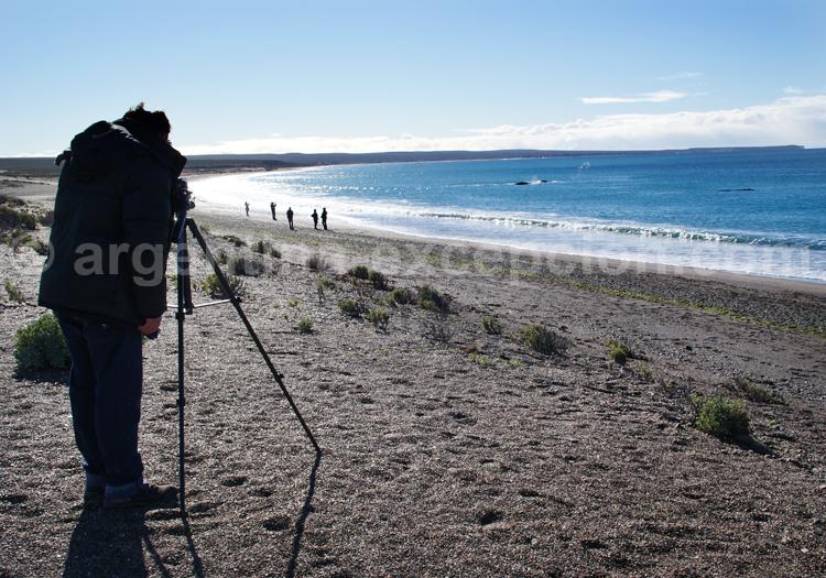 Observation de baleines depuis la plage Doradillo, isthme de Valdès