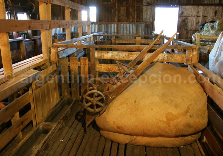 Ballots de laine, Patagonie