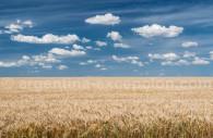 Agriculture en argentine