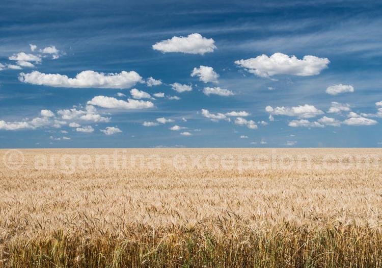 L'Agriculture en argentine