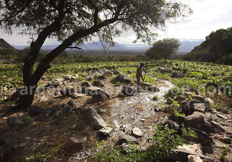 Histoire du vin argentin
