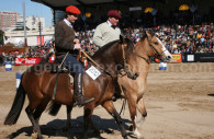 cheval peruano argentin argentine