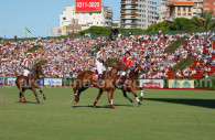 chevaux de polo argentine