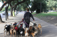 Dogwalker in Buenos-Aires