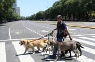 Dogwalker in Palermo, Argentina