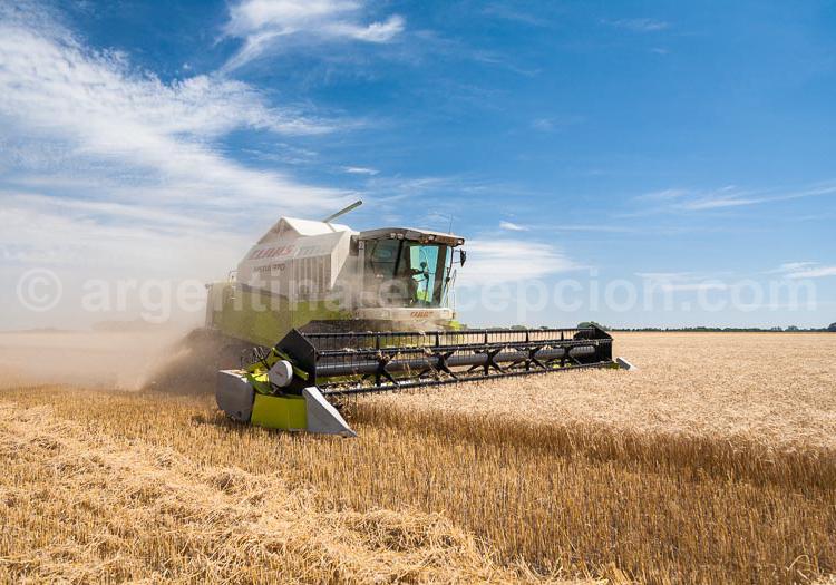 La Pampa argentine, grenier à blé de la planète