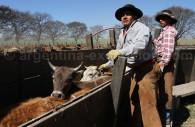 élevage en Argentine