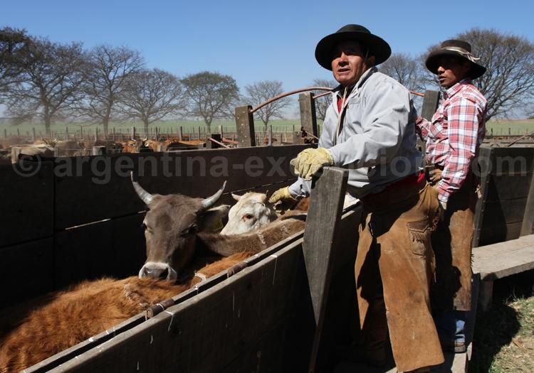 L'élevage en Argentine